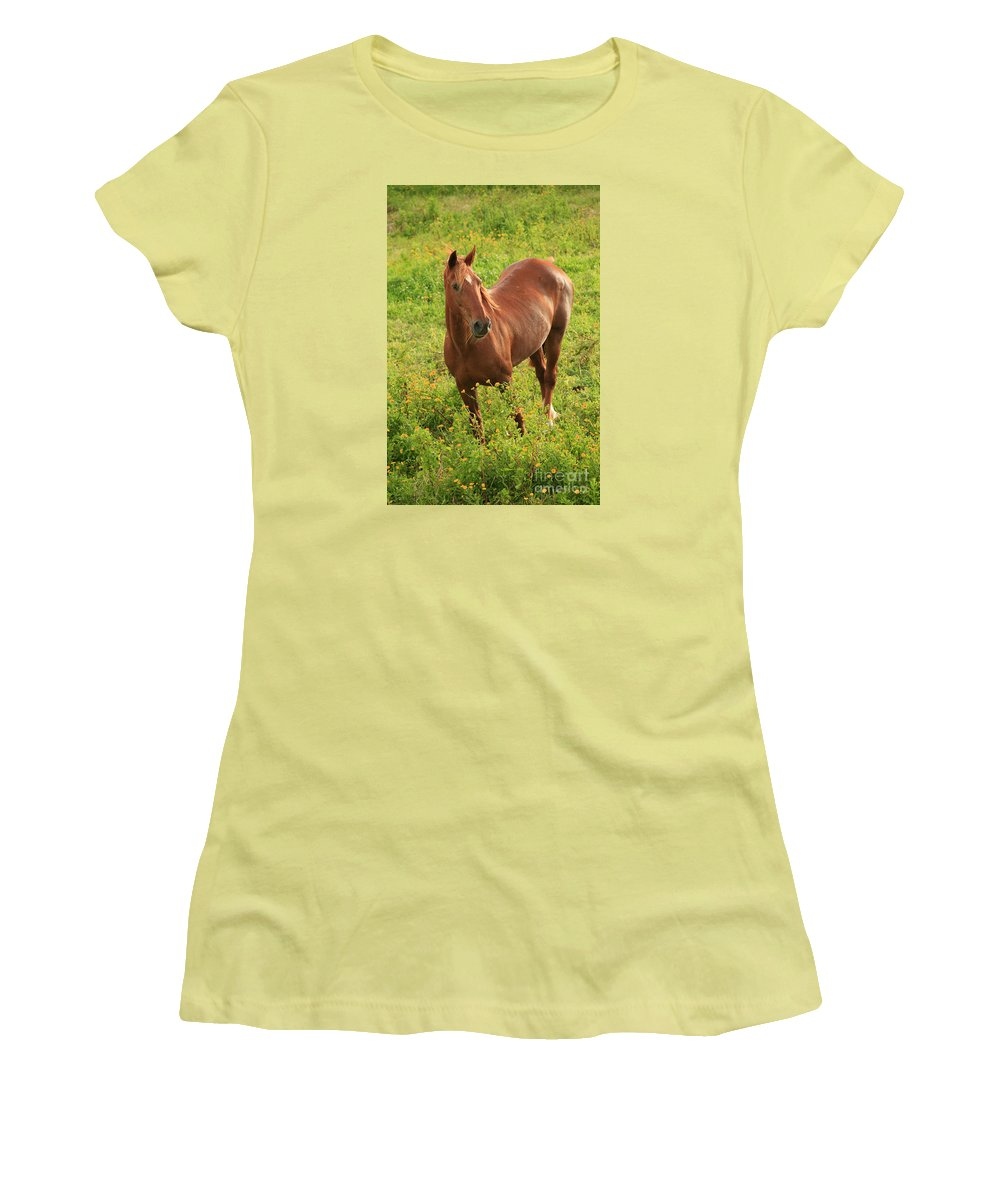 Animals Women's T-Shirt (Athletic Fit) featuring the photograph Horse In A Field With Flowers by Gaspar Avila