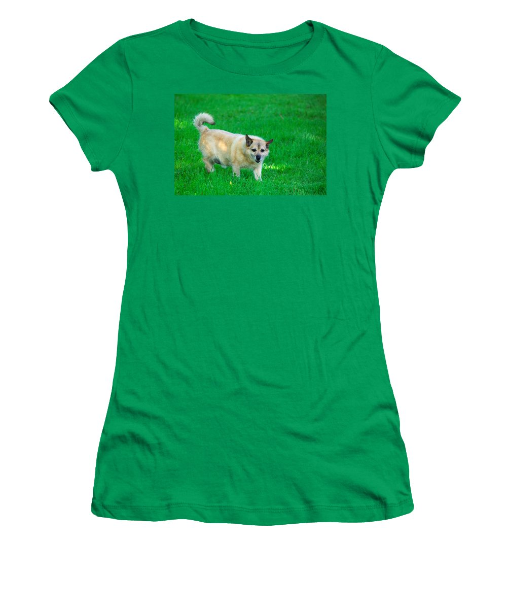 Dog Women's T-Shirt (Athletic Fit) featuring the photograph Luksi by Ivan Slosar
