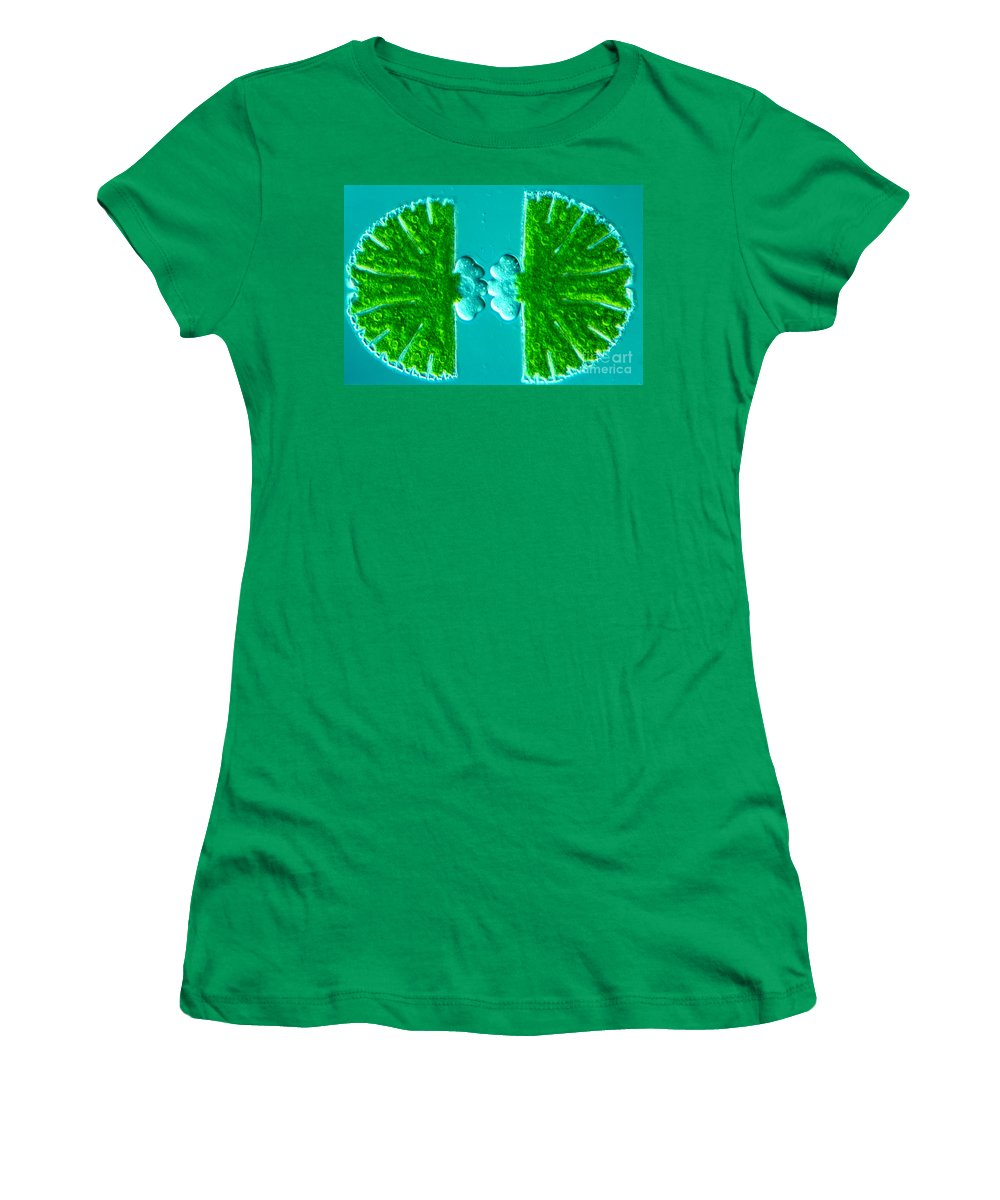 Algae Women's T-Shirt featuring the photograph Micrasterias Sp by M. I. Walker