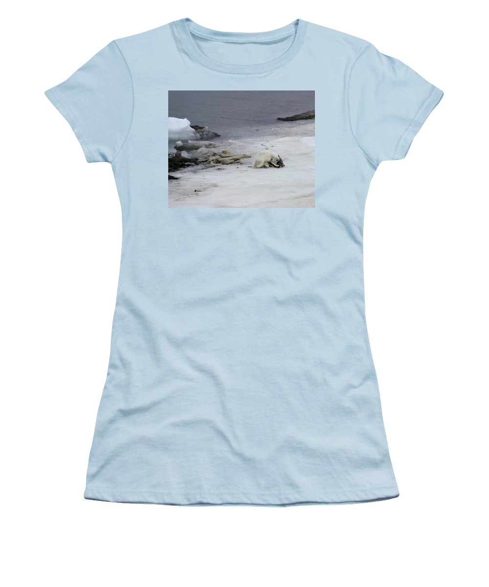 Arctic Fox Women's T-Shirt (Athletic Fit) featuring the photograph Arctic Fox Eating by Anthony Jones