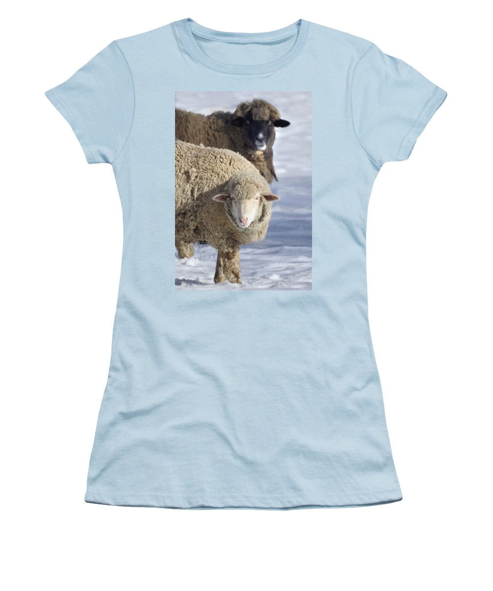 Sheep Women's T-Shirt (Athletic Fit) featuring the photograph Black And White by Heather Coen