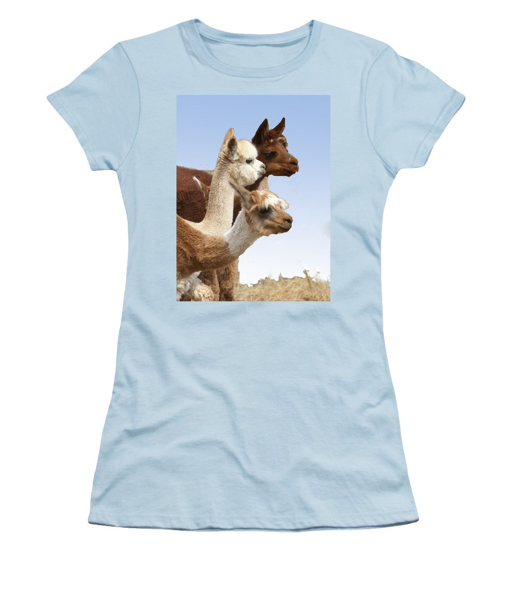 Llama Women's T-Shirt (Athletic Fit) featuring the photograph Llama's Three by Heather Coen