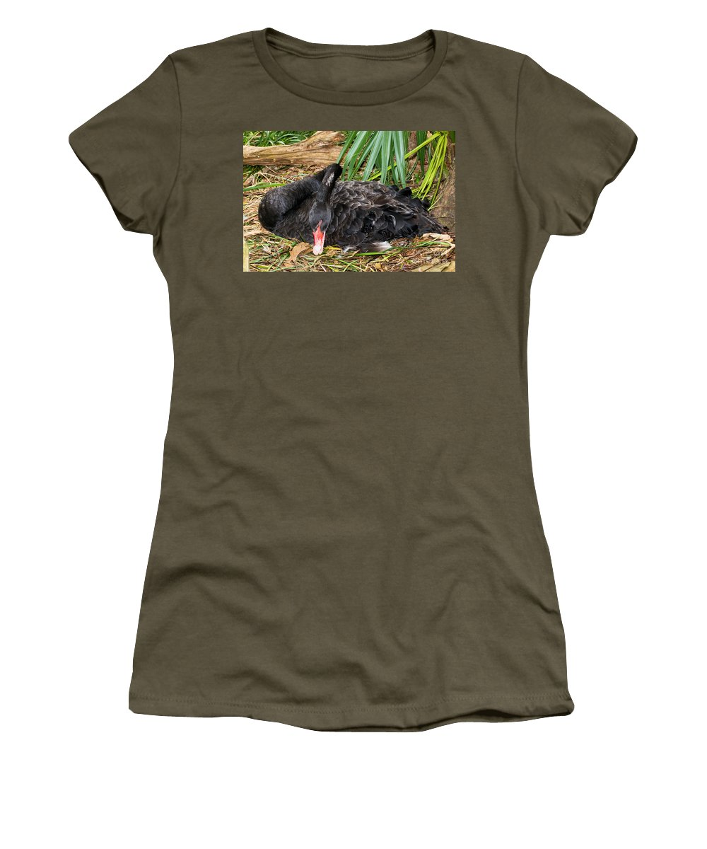 Nature Women's T-Shirt featuring the photograph Black Swan At Nest by Millard H. Sharp