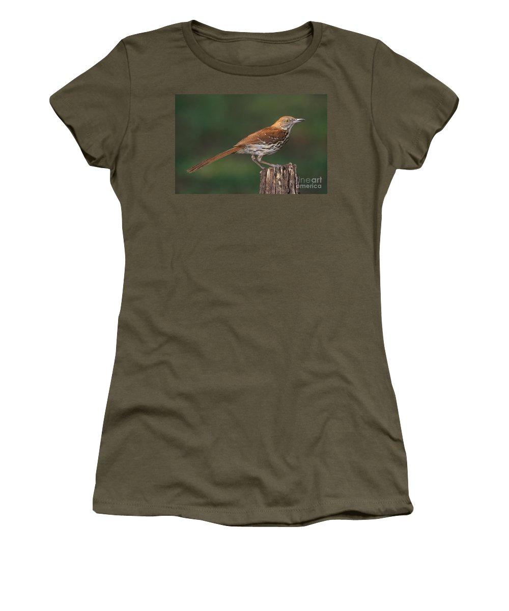 Animal Women's T-Shirt featuring the photograph Brown Thrasher by Millard H. Sharp