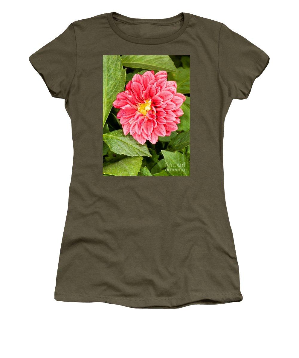 Nature Women's T-Shirt featuring the photograph Dahlia Flower by Millard H. Sharp