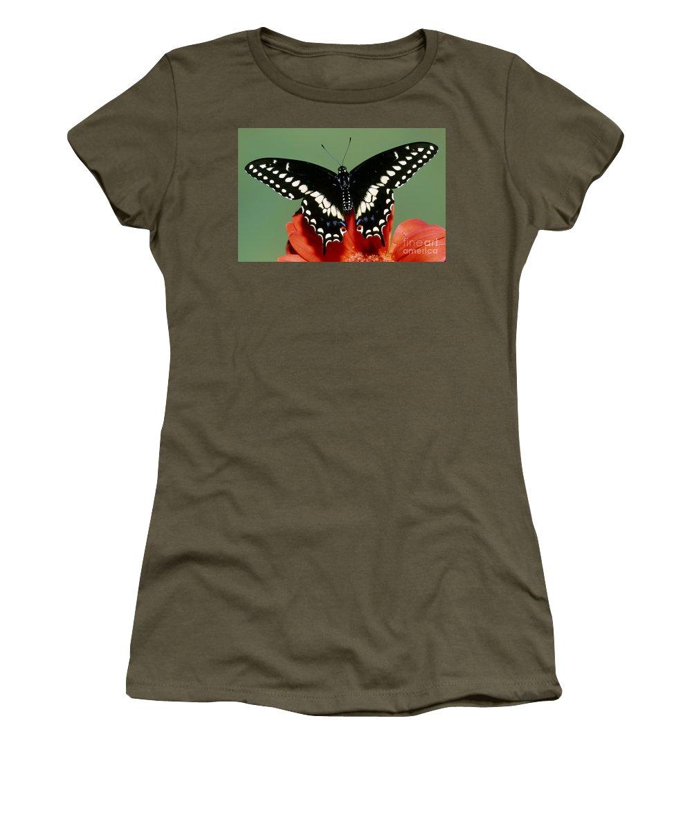 Fauna Women's T-Shirt featuring the photograph Eastern Black Swallowtail Butterfly by Millard H. Sharp