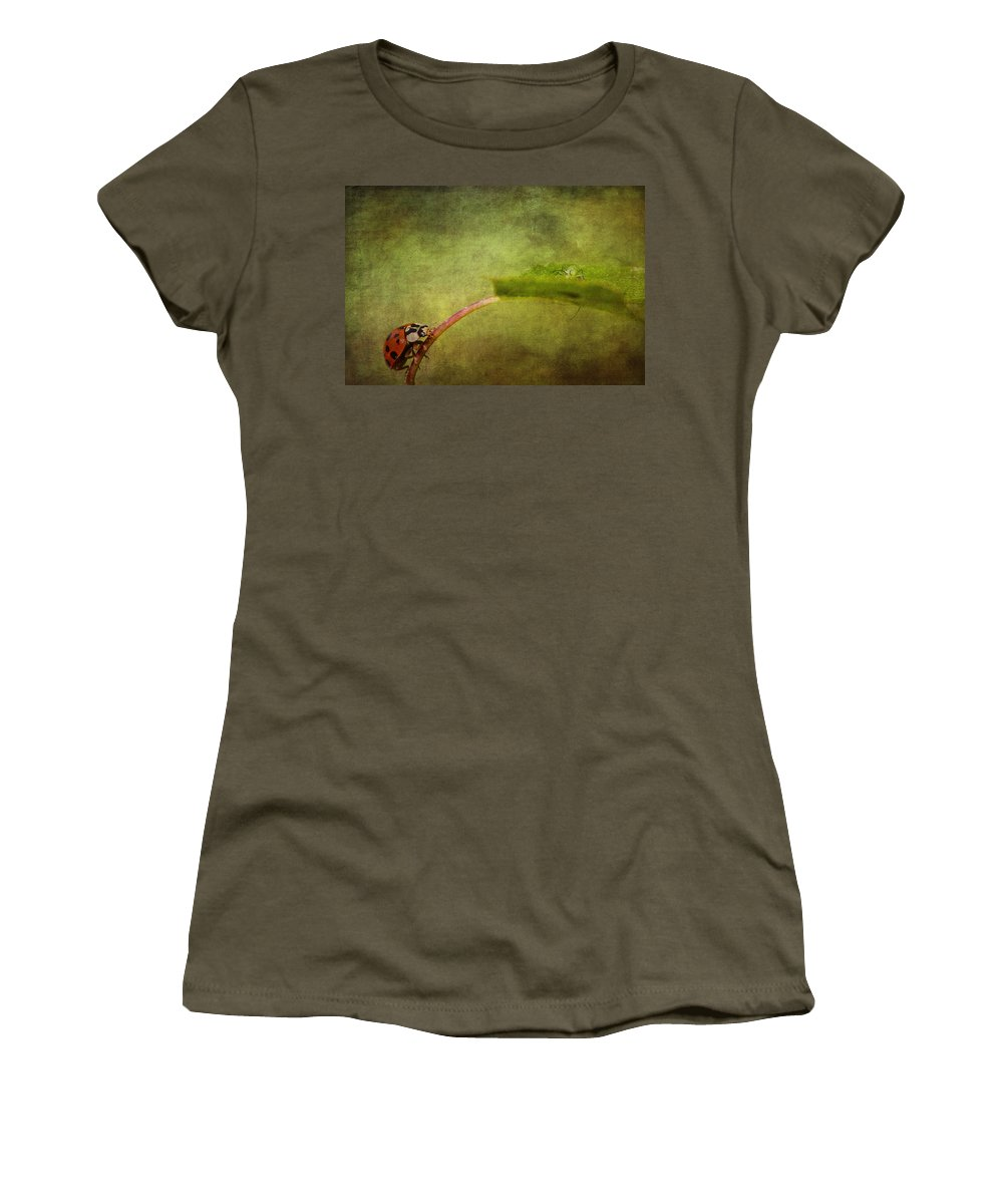 Ladybird Women's T-Shirt featuring the photograph Looking For Dinner by Chris Smith