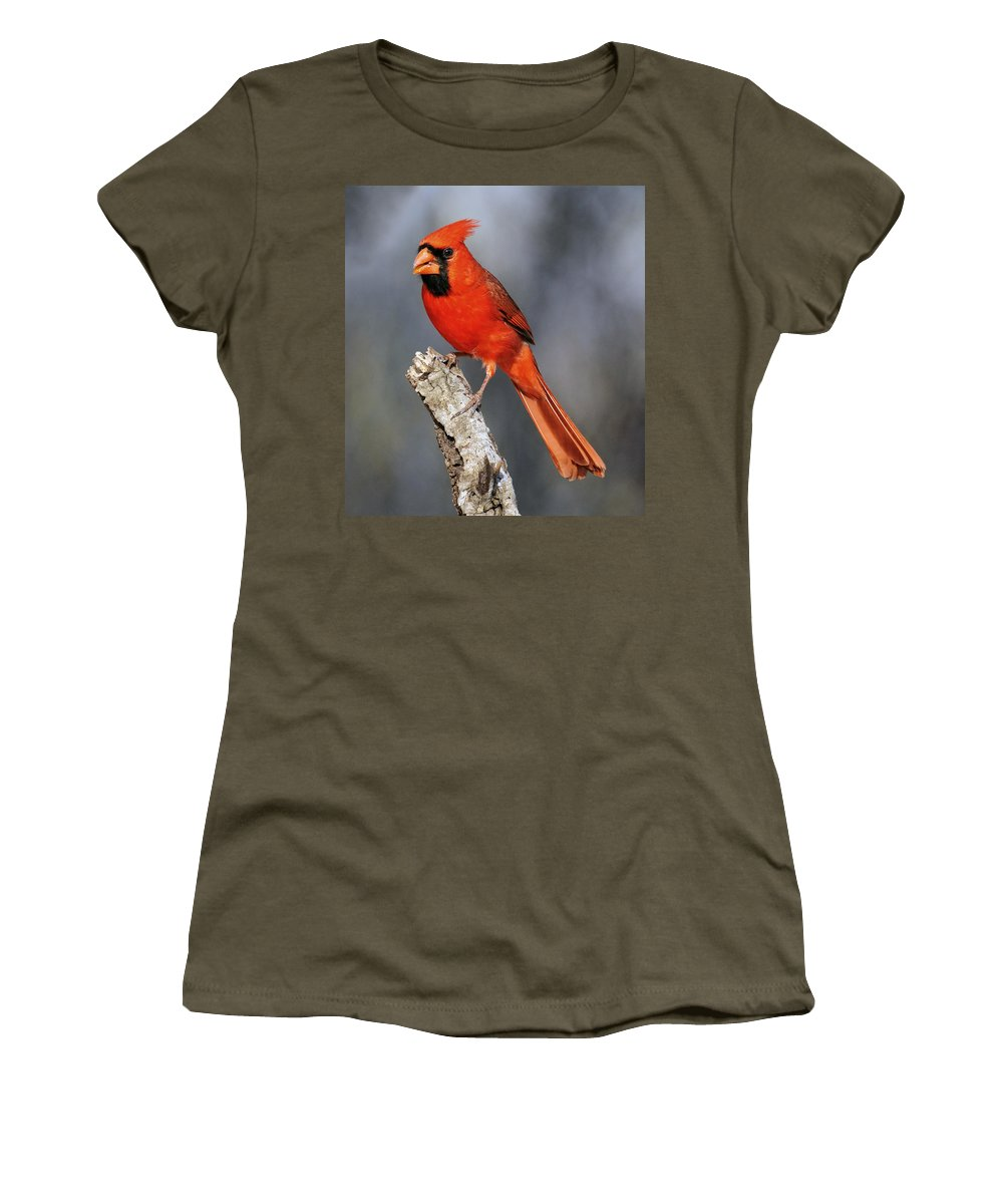 Male Cardinal Women's T-Shirt featuring the photograph Male Cardinal by Dave Mills