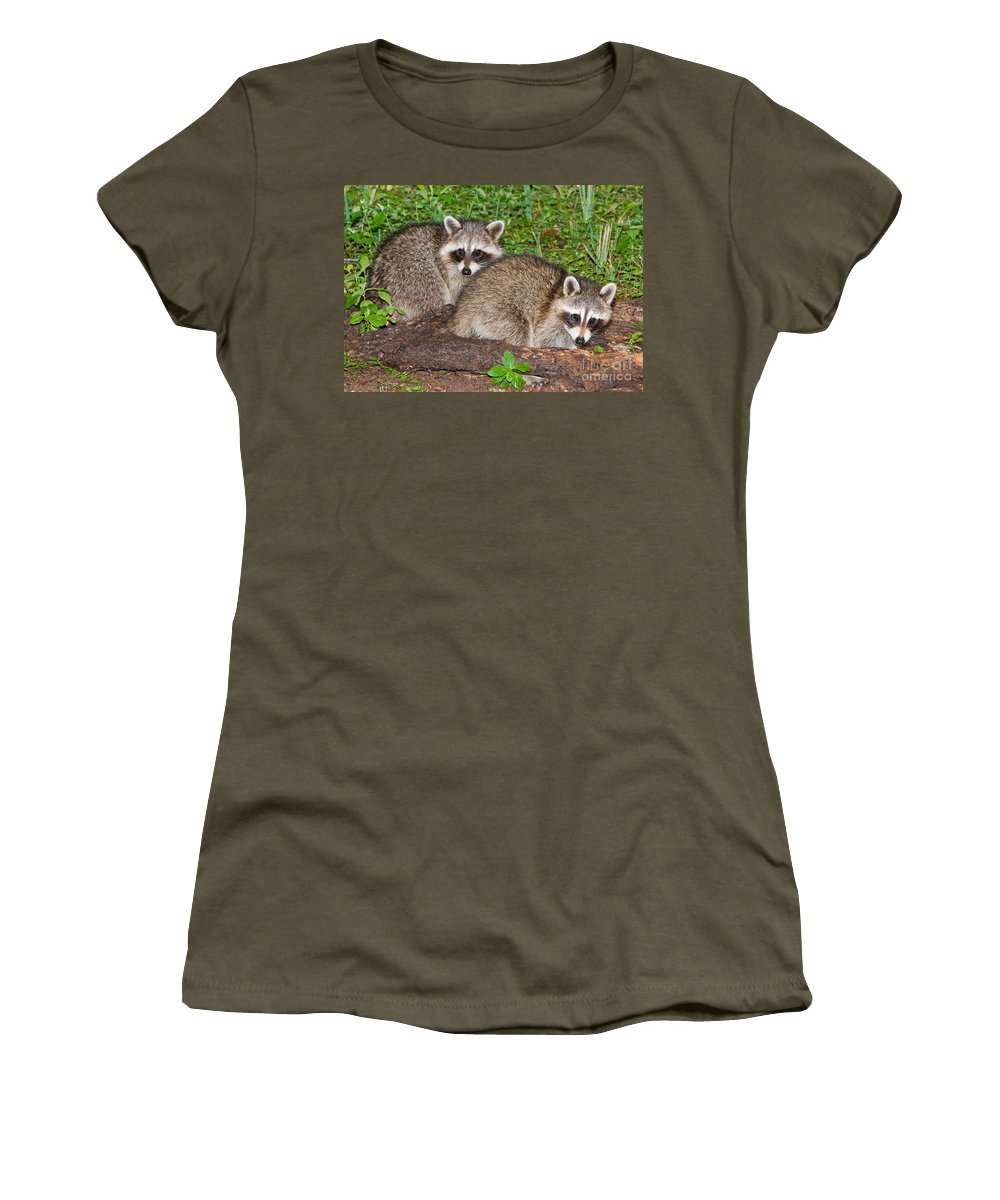 Fauna Women's T-Shirt featuring the photograph Raccoons by Millard H. Sharp