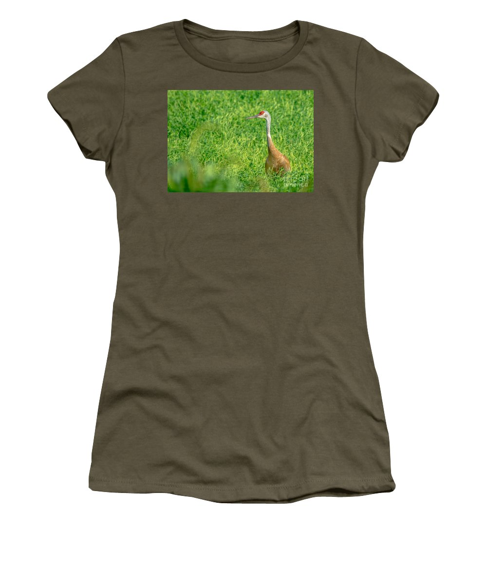 Field Women's T-Shirt featuring the photograph Sandhill Crane by Cheryl Baxter
