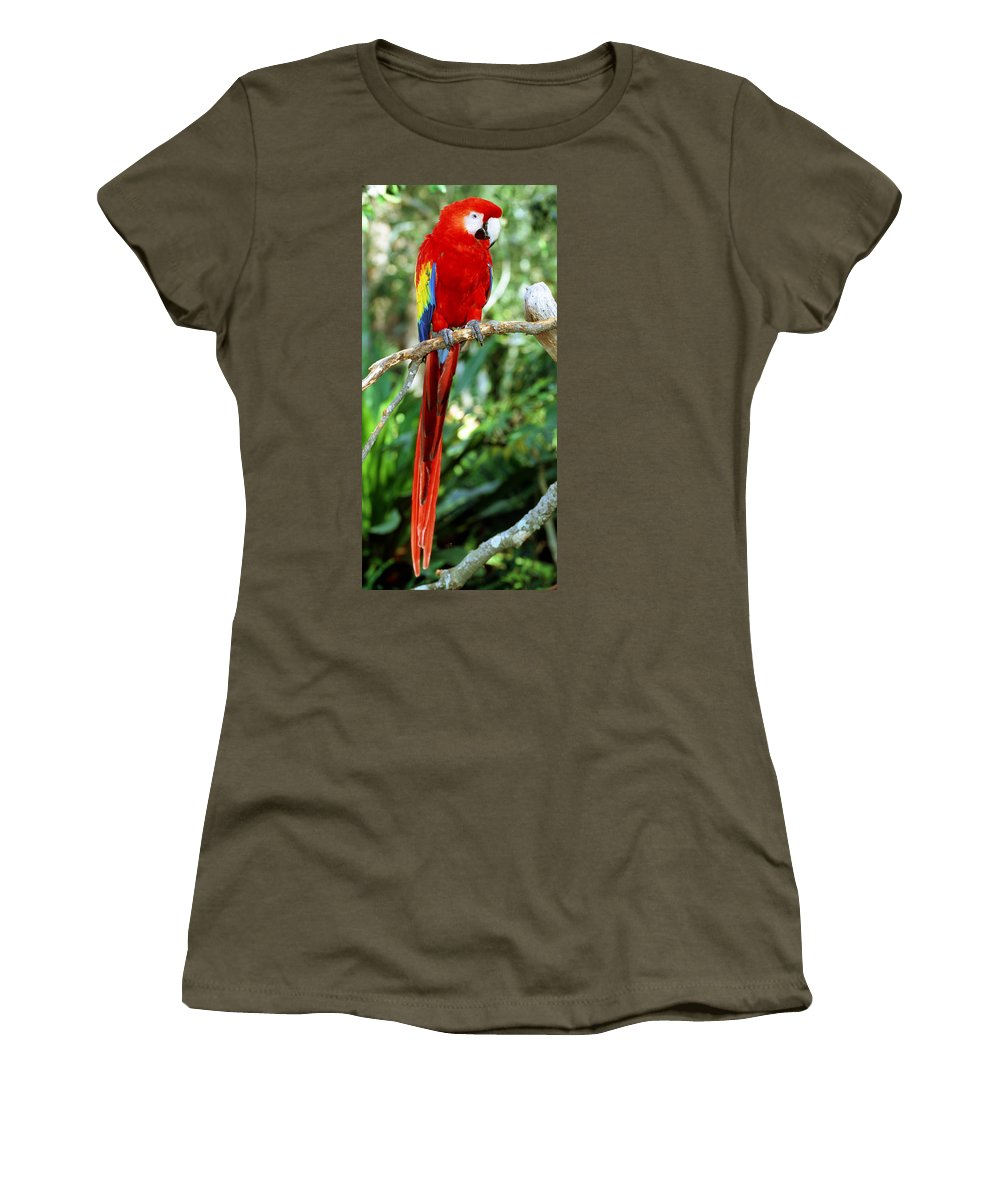 Scarlet Macaw Women's T-Shirt featuring the photograph Scarlet Macaw by Millard H Sharp