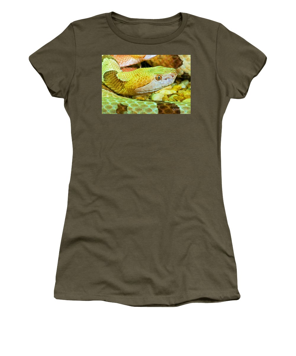 Animal Women's T-Shirt featuring the photograph Southern Copperhead by Millard H. Sharp