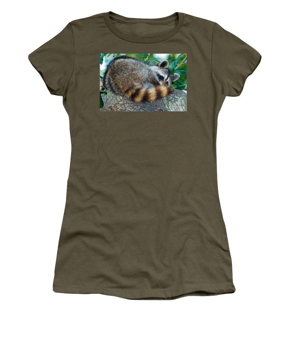 Nature Women's T-Shirt featuring the photograph Raccoon by Millard H. Sharp