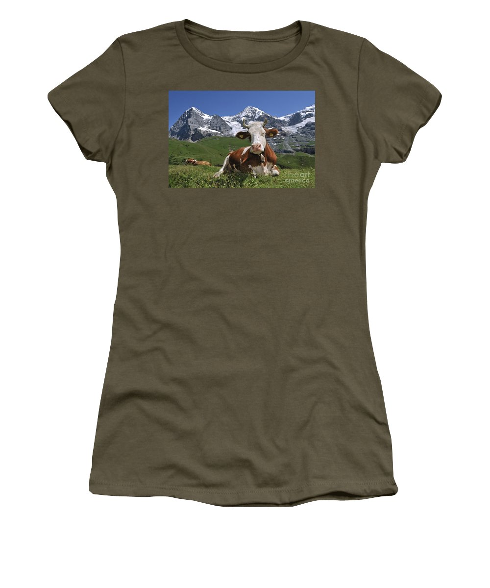 Alpine Cow Women's T-Shirt featuring the photograph 100205p181 by Arterra Picture Library