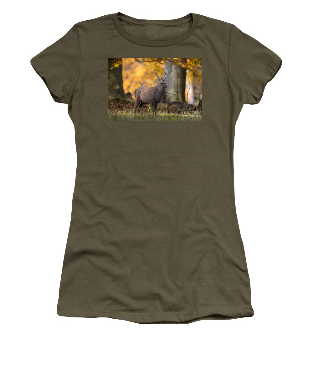 Sika Deer Women's T-Shirt featuring the photograph 110307p069 by Arterra Picture Library
