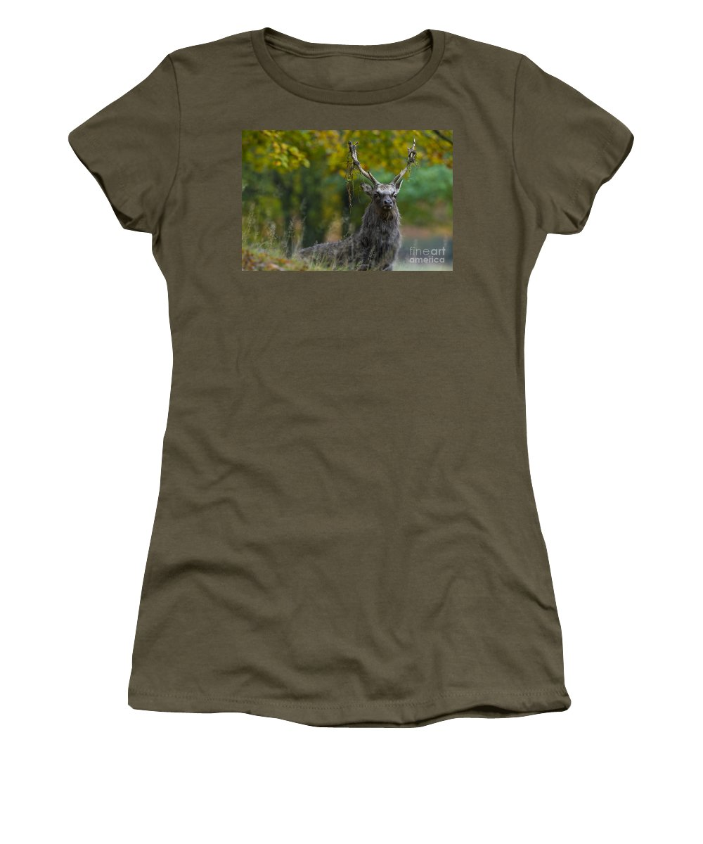 Sika Deer Women's T-Shirt featuring the photograph 110307p070 by Arterra Picture Library