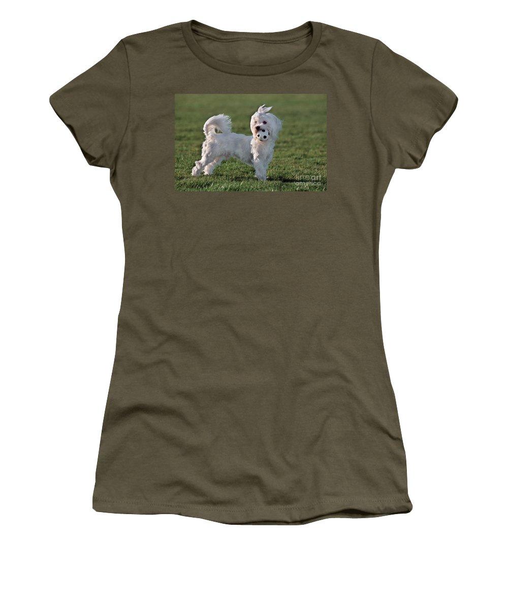 Maltezer Women's T-Shirt featuring the photograph 110307p155 by Arterra Picture Library