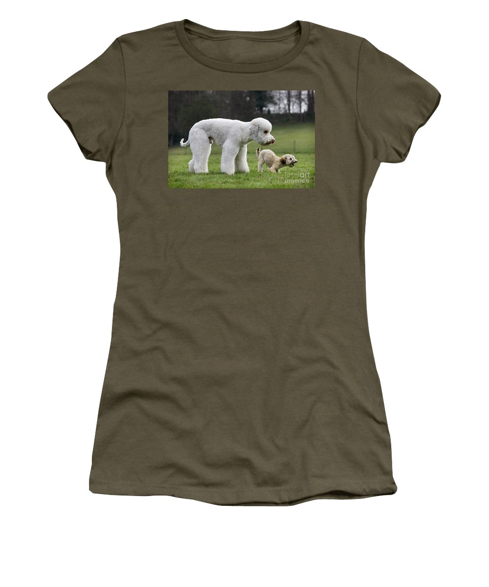 Standard Poodle Women's T-Shirt featuring the photograph 110506p119 by Arterra Picture Library