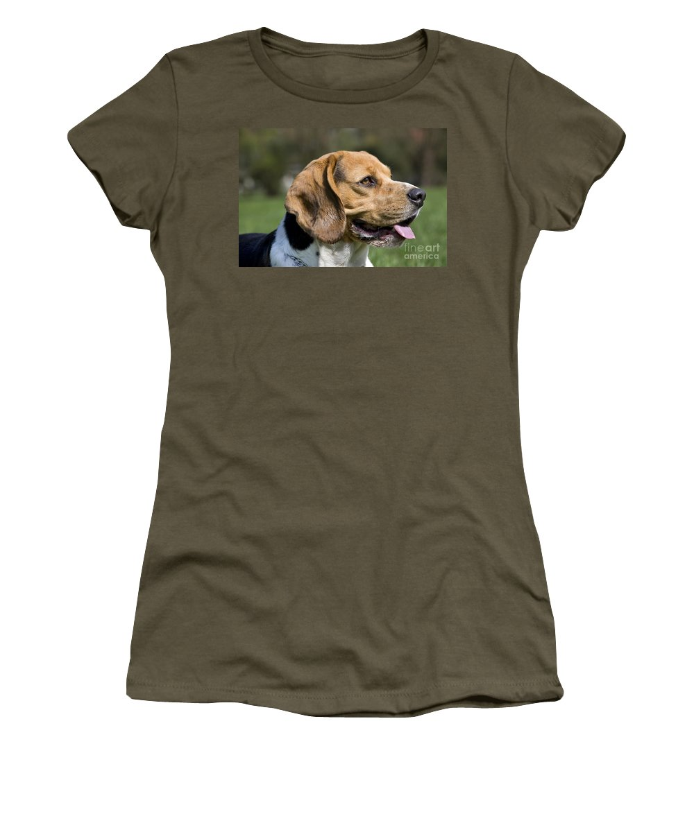 Beagle Women's T-Shirt featuring the photograph 110506p141 by Arterra Picture Library