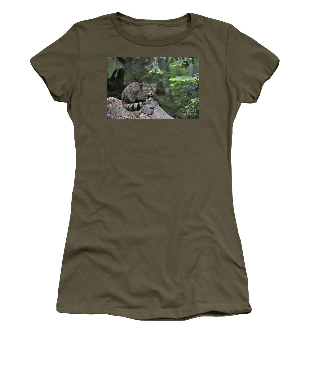 Wildcat Women's T-Shirt featuring the photograph 110613p008 by Arterra Picture Library