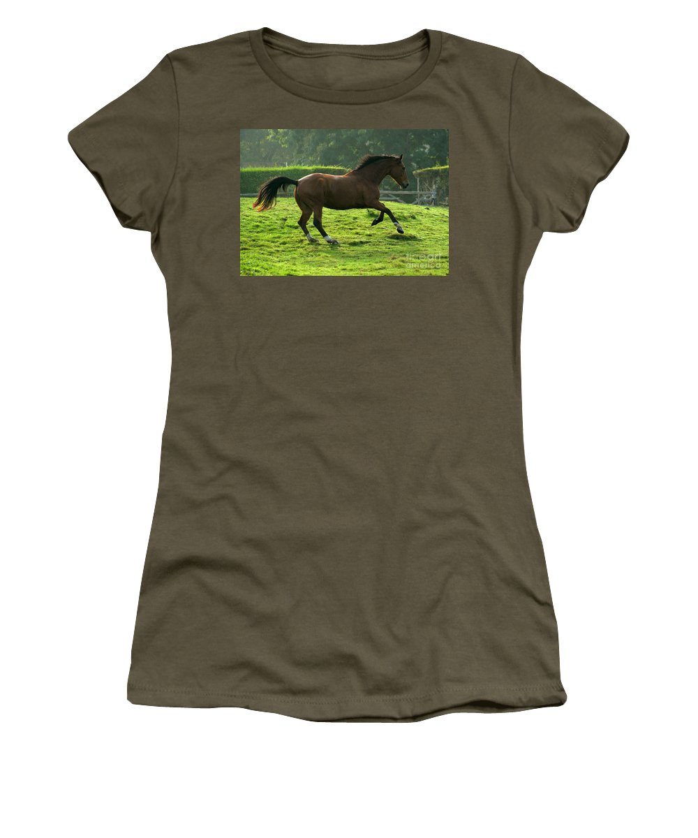 Grey Horse Women's T-Shirt featuring the photograph The Bay Horse by Angel Ciesniarska