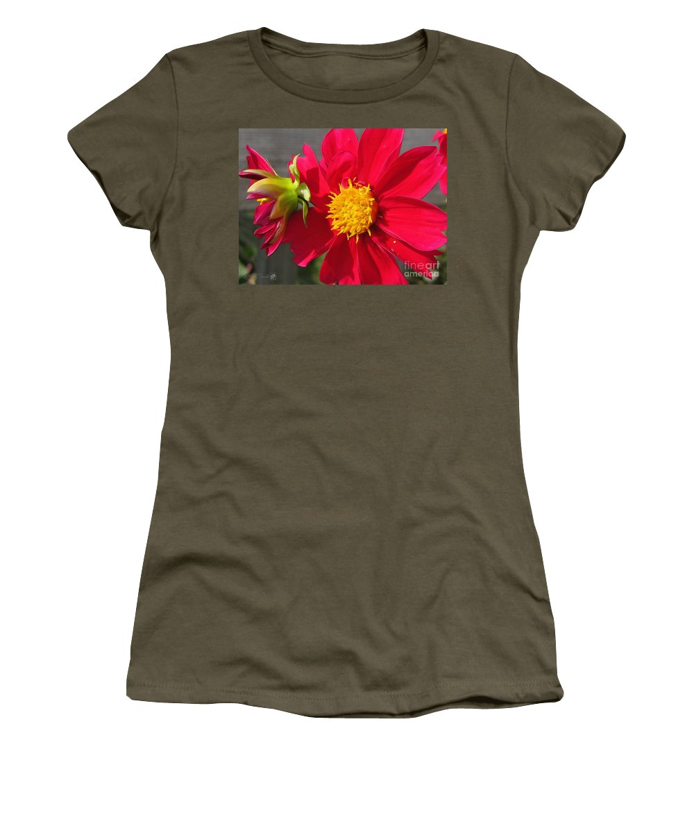Dahlia Women's T-Shirt featuring the painting Dahlia From The Showpiece Mix by J McCombie