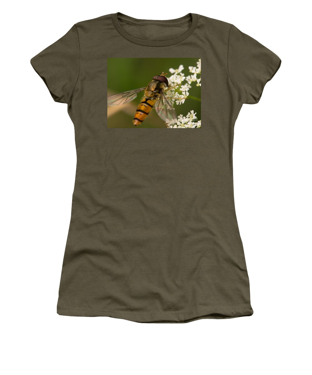 Insect Women's T-Shirt featuring the photograph Hoverfly by Brothers Beerens