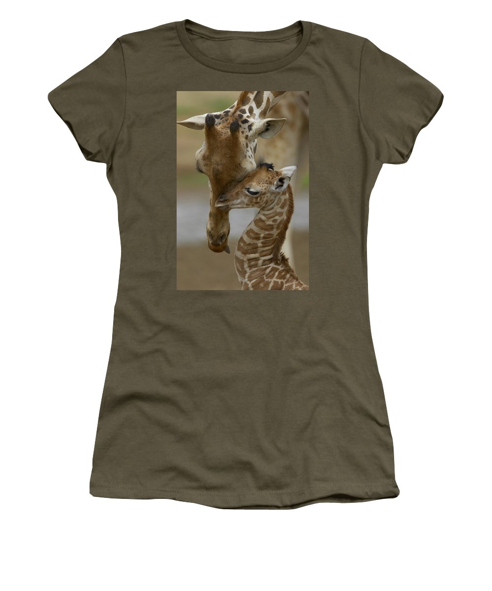 00119300 Women's T-Shirt featuring the photograph Rothschild Giraffe And Calf by San Diego Zoo