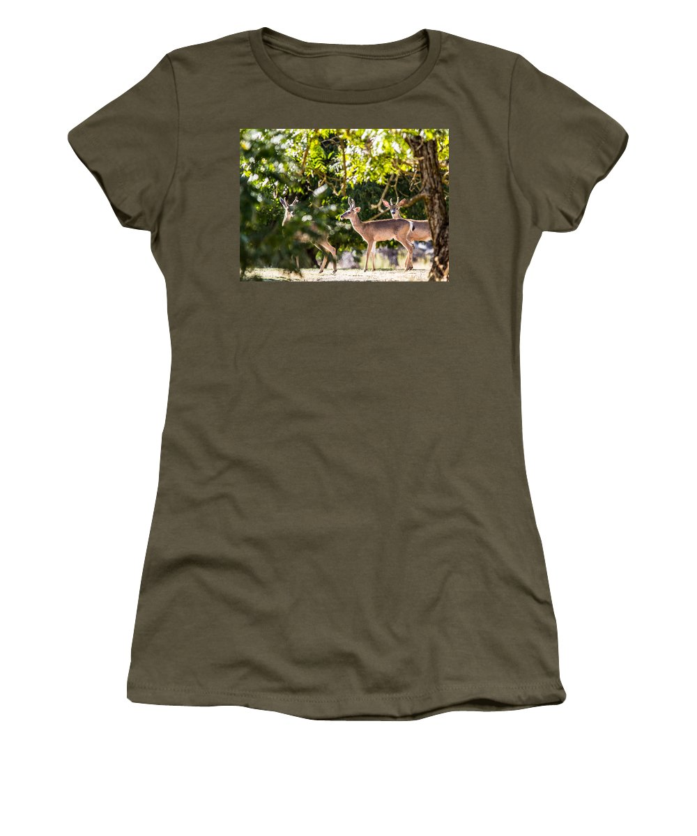 3 Deer Black Tails Spikes Outdoors Nature Wildlife Bucks All Prints Are Available In Prints Women's T-Shirt featuring the photograph 3 Bucks Caught In A Orchard by Brian Williamson