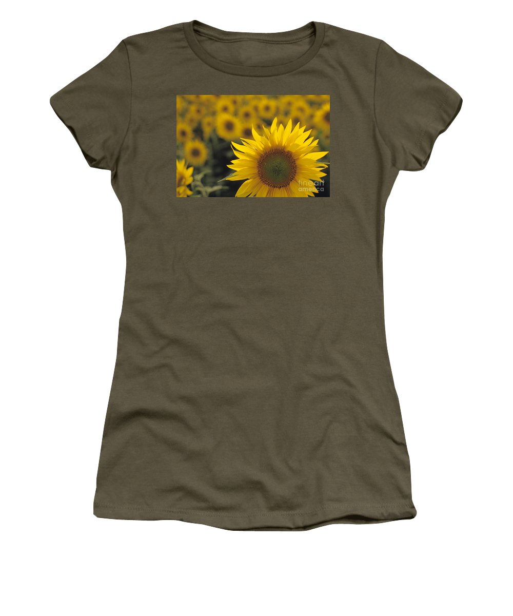 Travel Women's T-Shirt featuring the photograph Close-up Of Sunflowers In A Field by Jim Corwin