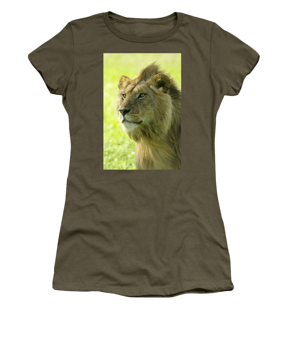 Lion Women's T-Shirt featuring the photograph Golden Boy by Michele Burgess