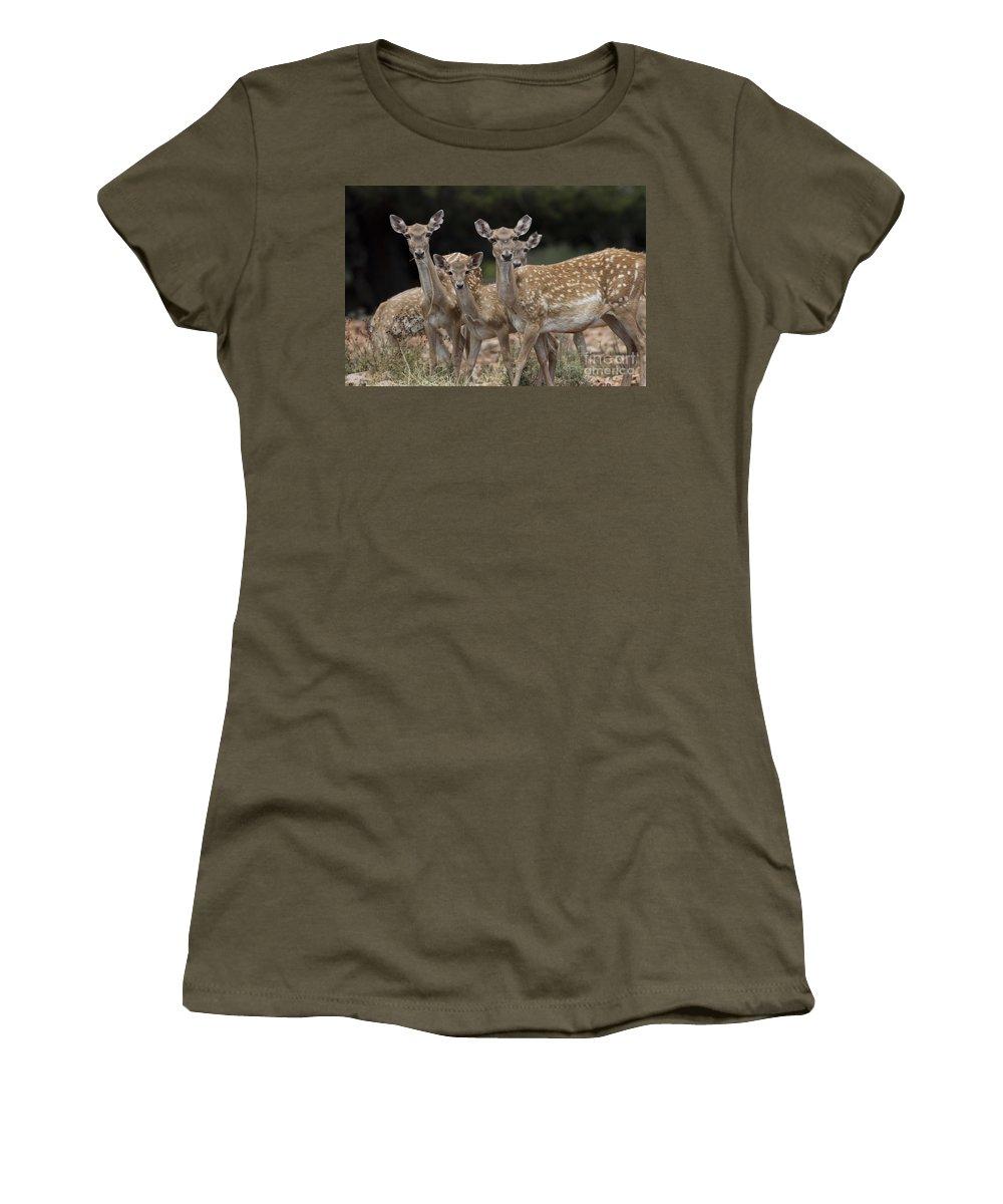 Fallow Women's T-Shirt featuring the photograph Mesopotamian Fallow Deer by Eyal Bartov
