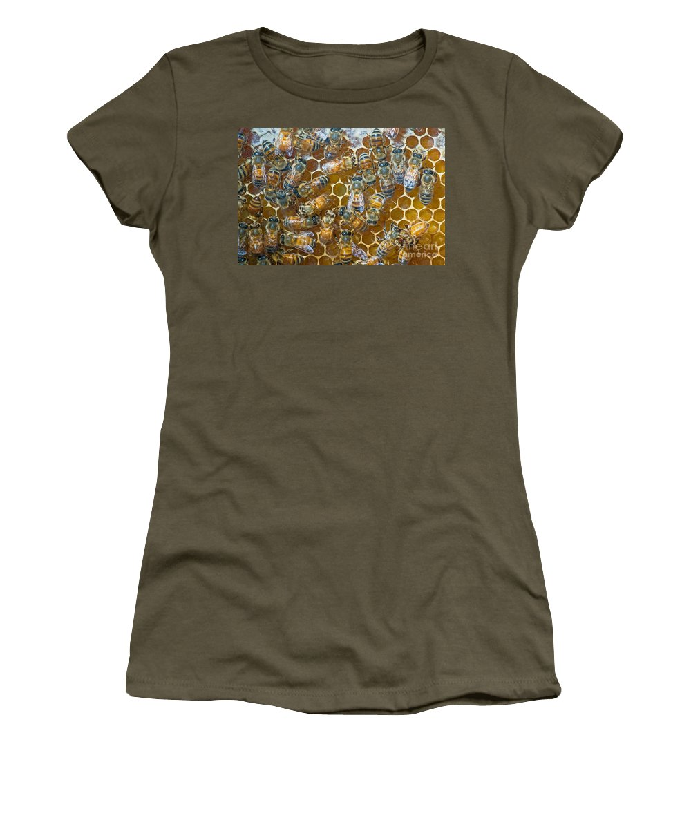 Insect Women's T-Shirt featuring the photograph Honey Bees In Hive by Millard H. Sharp