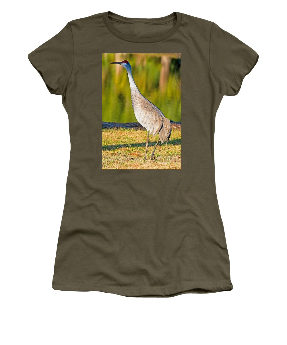 Fauna Women's T-Shirt featuring the photograph Sandhill Crane by Millard H. Sharp