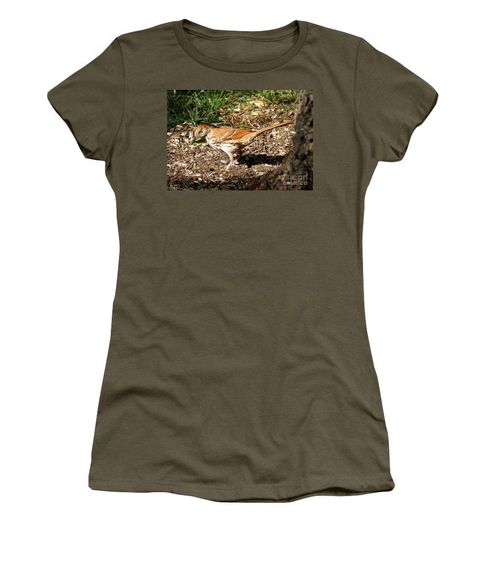 Birds Women's T-Shirt featuring the photograph Brown Thrasher by Lori Tordsen
