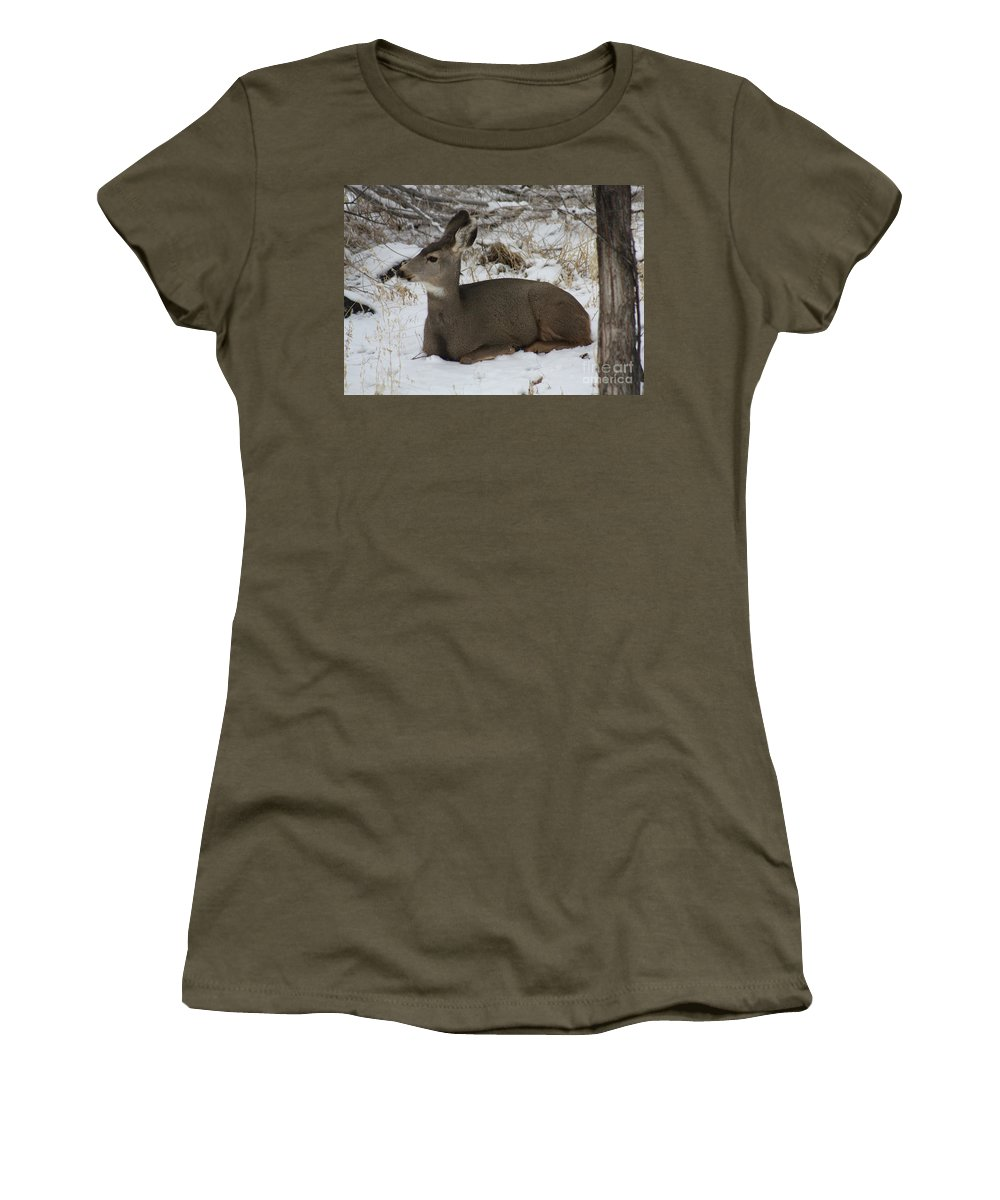 Deer Women's T-Shirt featuring the photograph A Bed Of Snow by Brandi Maher