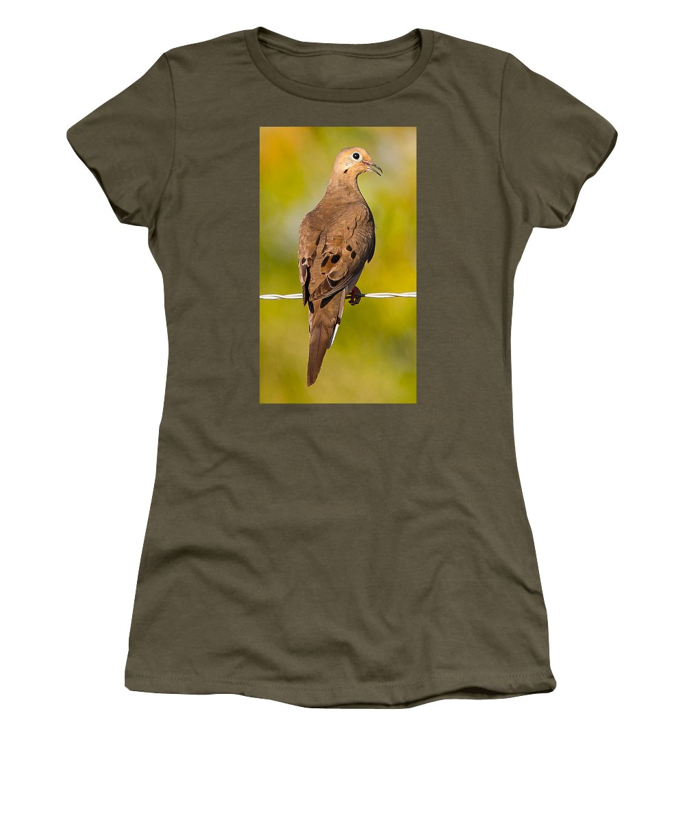Doves Wildlife Outdoors Women's T-Shirt (Athletic Fit) featuring the photograph A Morning Dove by Brian Williamson
