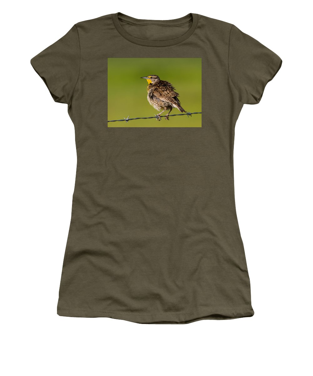 Birds Women's T-Shirt (Athletic Fit) featuring the photograph A Western Meadow Lark by Brian Williamson