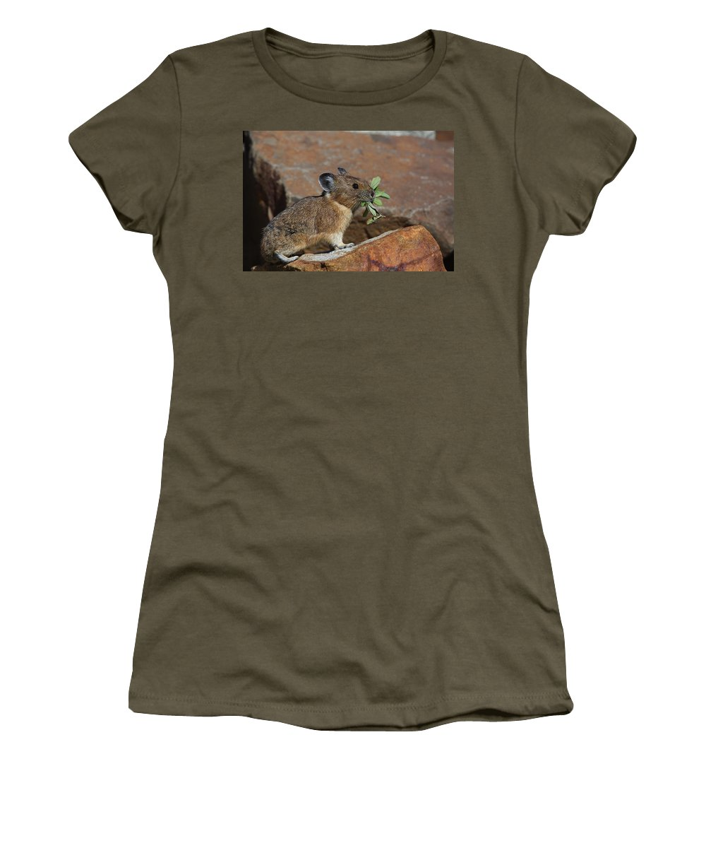 Pika Women's T-Shirt featuring the photograph American Pika At Harts Pass by Tom Reichner