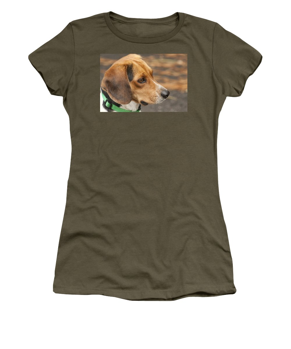 Beagle Women's T-Shirt featuring the photograph Beagle Loyalty by Kathy Clark