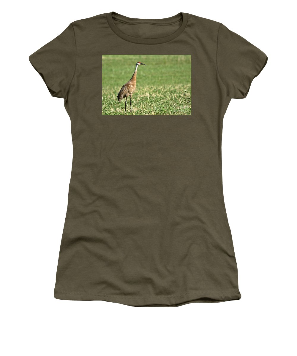 Sandhill Cranes Women's T-Shirt featuring the photograph Beautiful Sandhill Crane by Cheryl Baxter