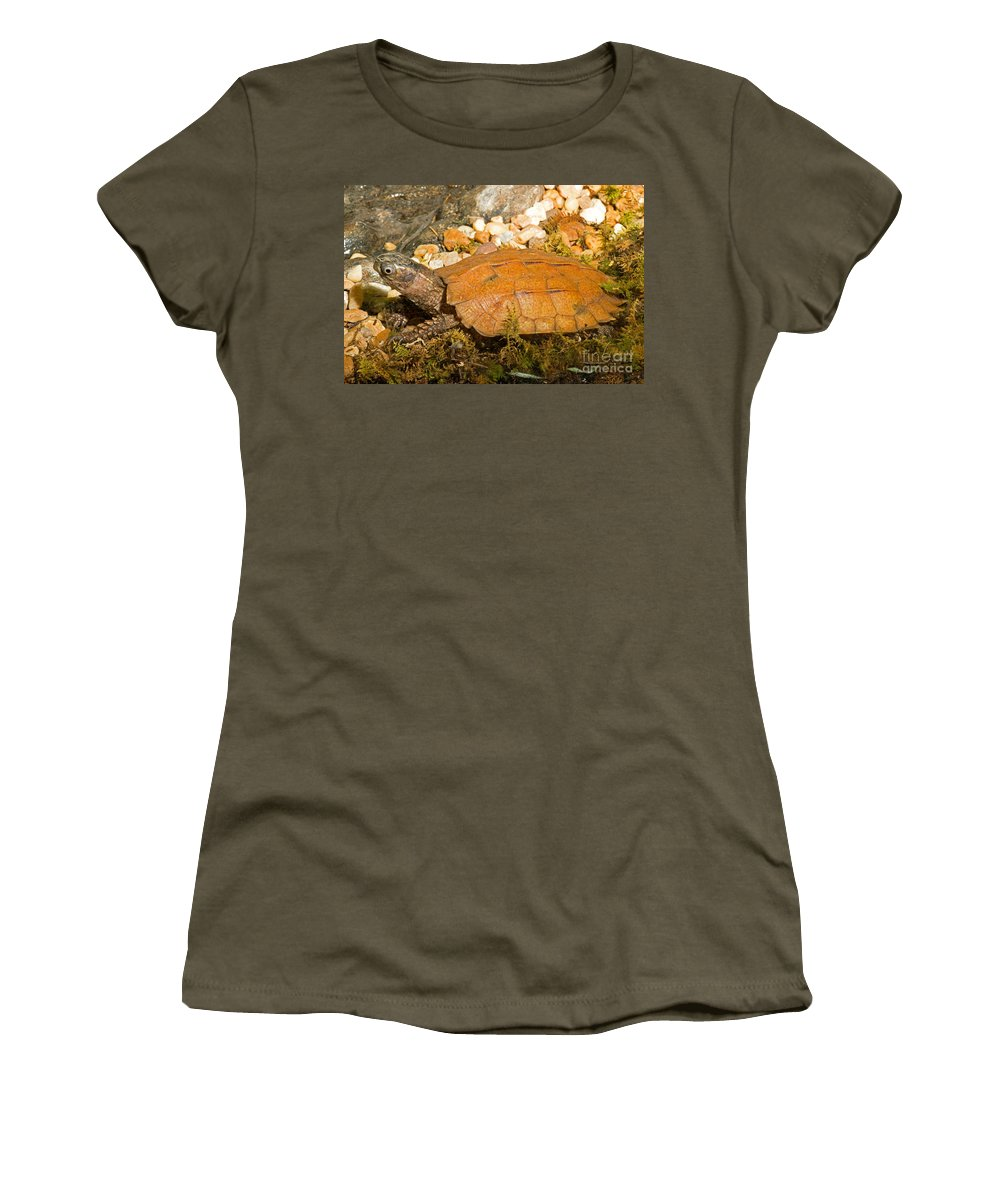 Nature Women's T-Shirt featuring the photograph Black Breasted Leaf Turtle by Millard H. Sharp