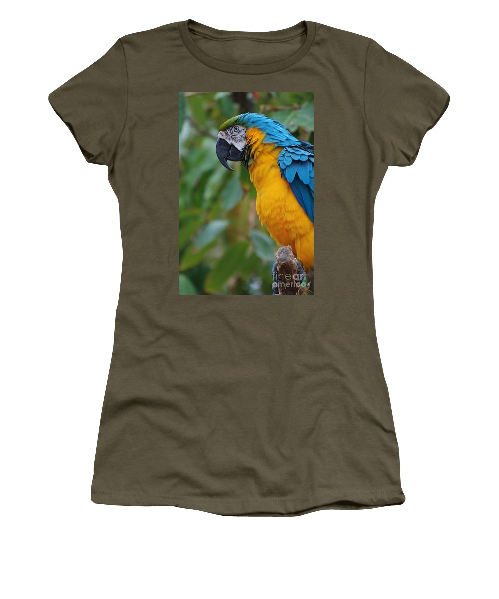 Macaw Women's T-Shirt featuring the photograph Blue And Gold Macaw by DejaVu Designs