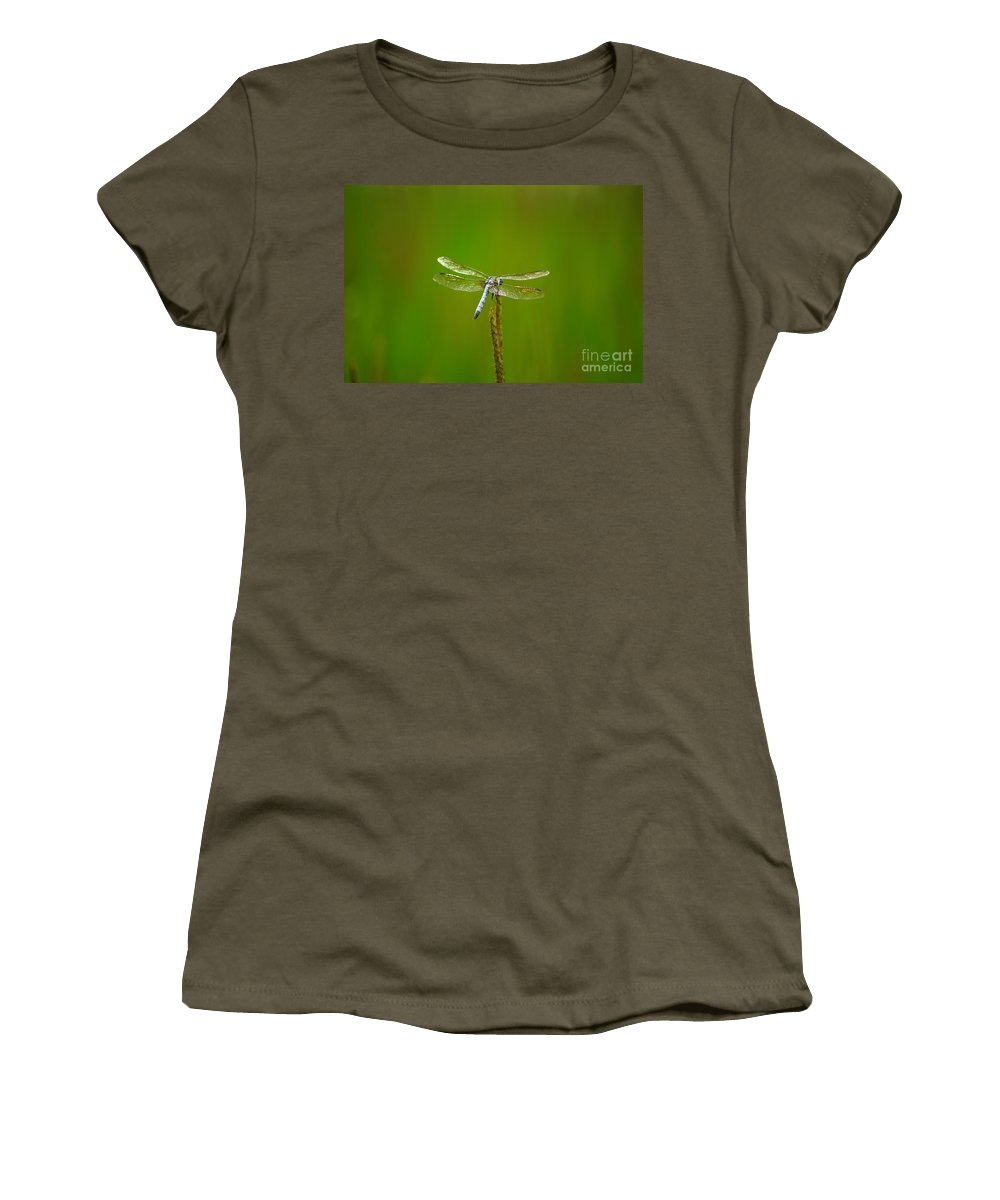 Blue Dasher Dragonfly Women's T-Shirt featuring the photograph Blue Dasher Dragonfly by Kitrina Arbuckle