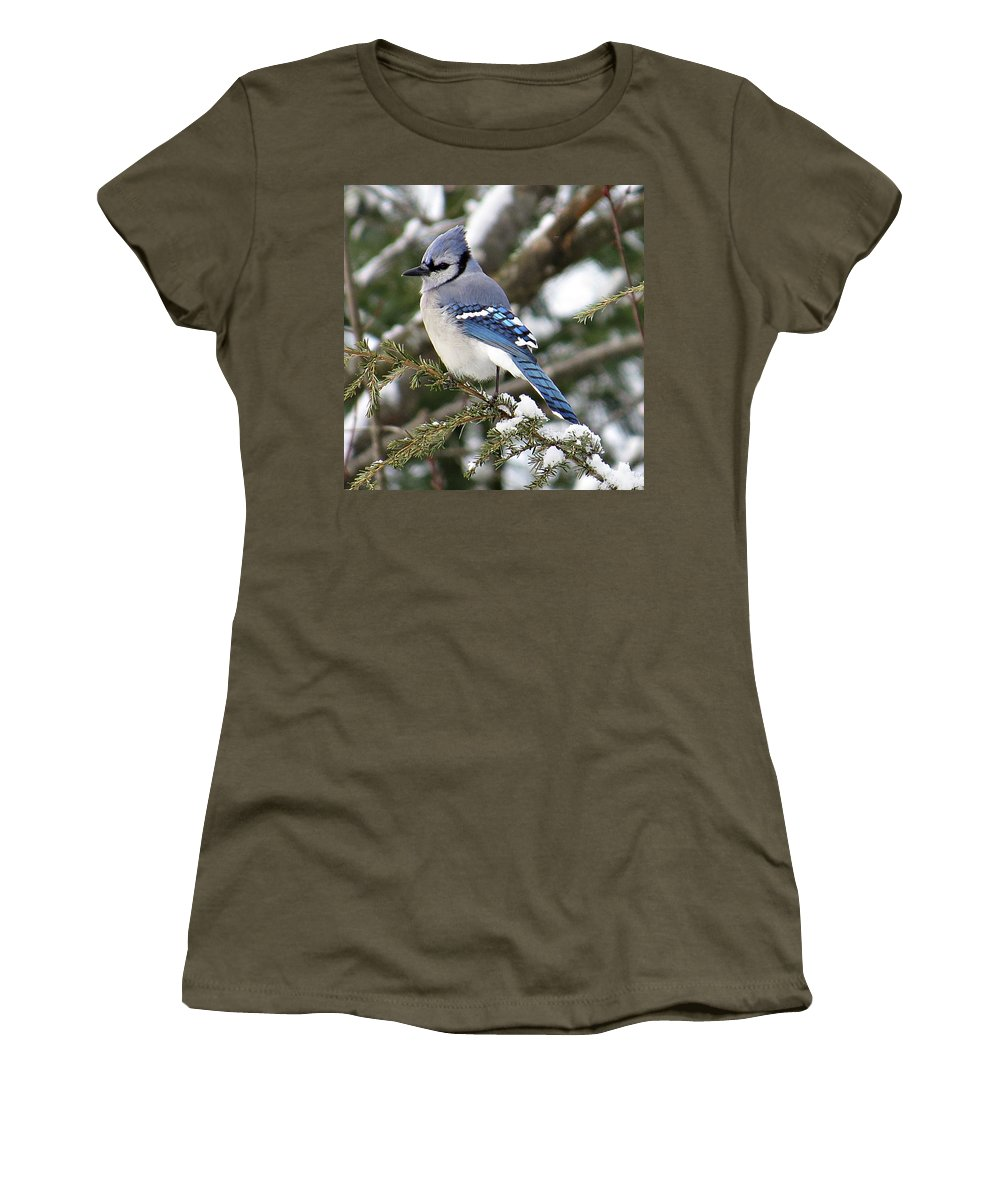 Blue Jay Women's T-Shirt featuring the photograph Blue Jay On Hemlock by MTBobbins Photography