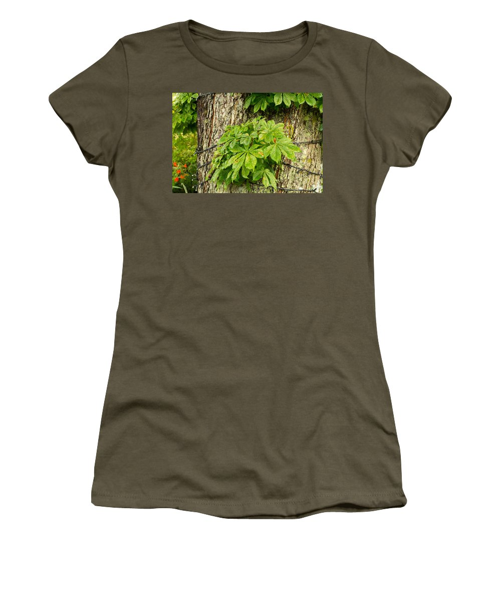 Leaf Women's T-Shirt featuring the photograph Braided Trunk by Mair Hunt