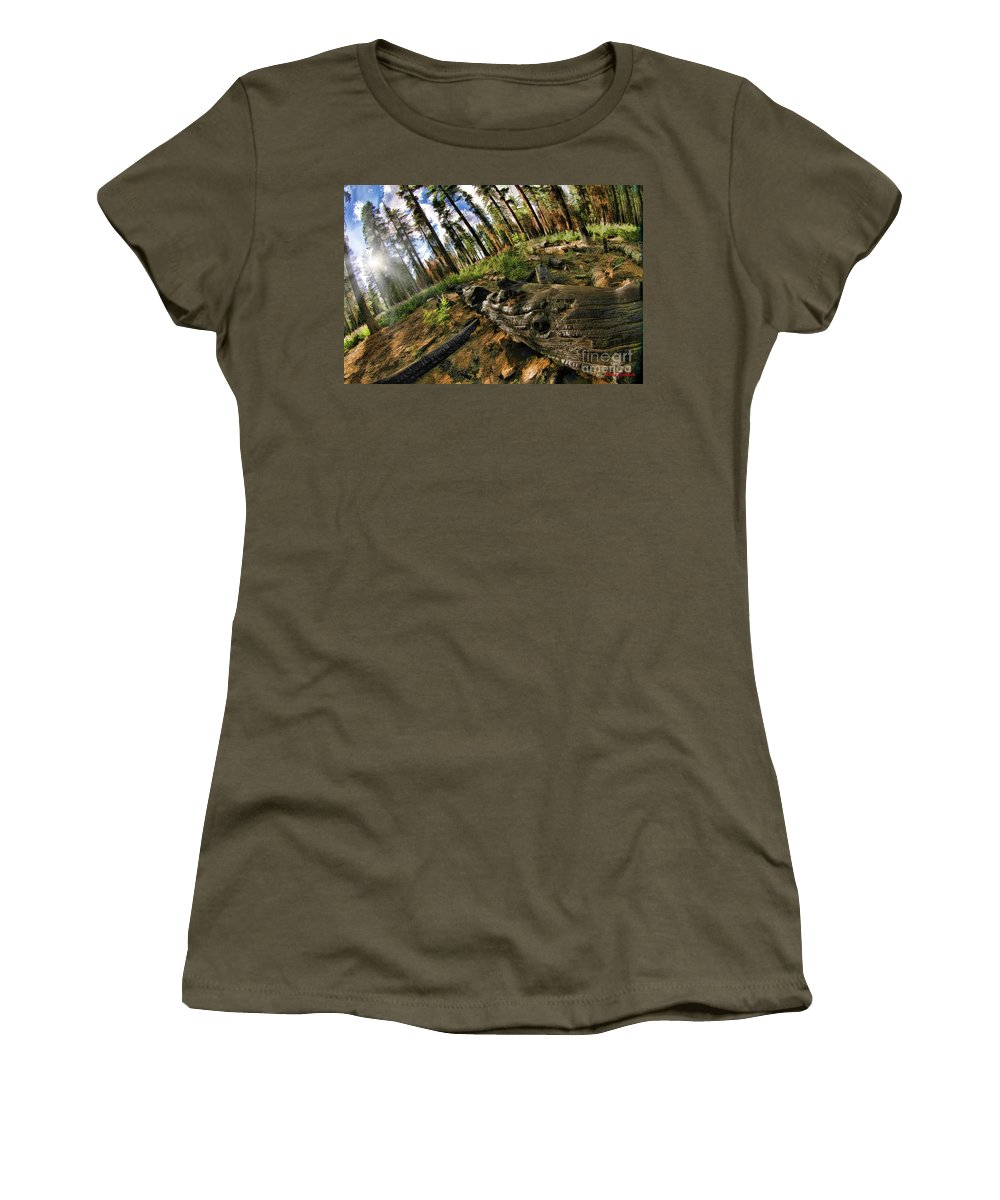 Women's T-Shirt featuring the photograph Burnt Tree In A New Forest. by Blake Richards