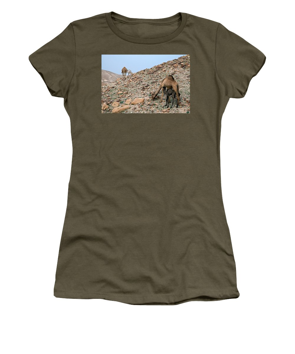 Camels Women's T-Shirt featuring the photograph Camels At The Israel Desert -1 by Dubi Roman