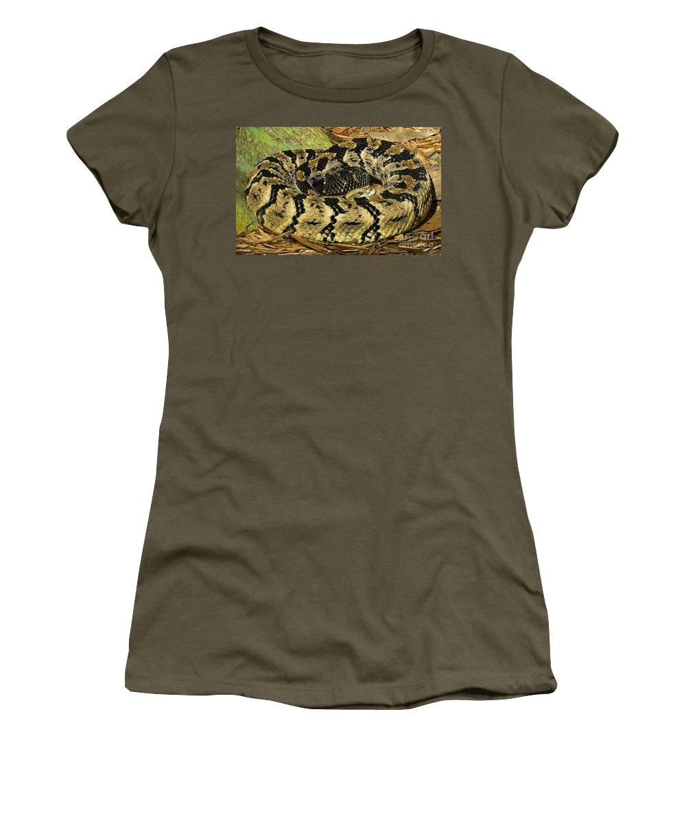 Fauna Women's T-Shirt featuring the photograph Canebrake Rattlesnake by Millard H. Sharp