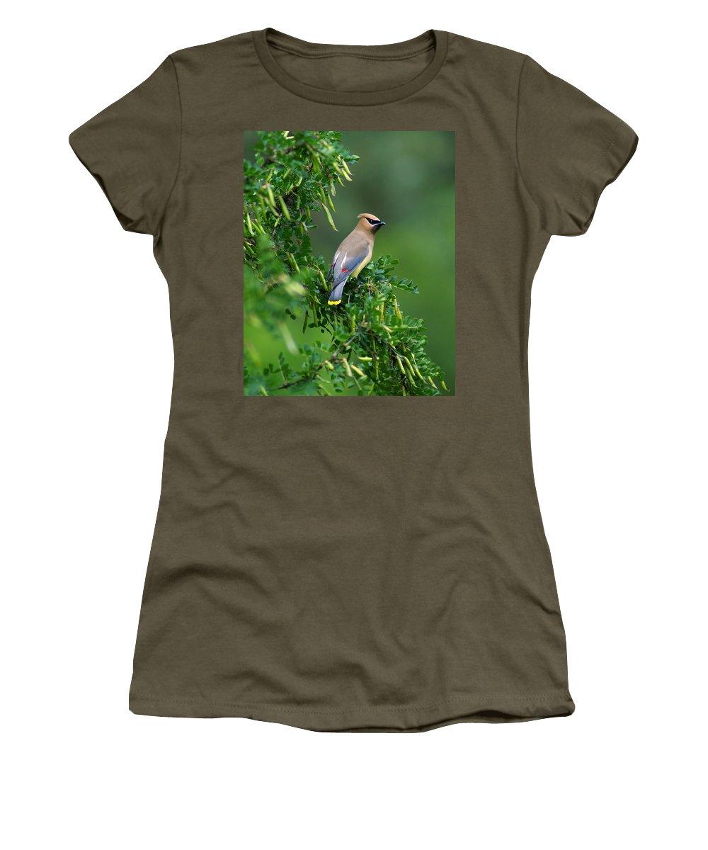 Birds Women's T-Shirt featuring the photograph Cedar Waxwing 2 by Ben Upham III